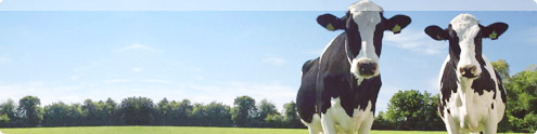 Сельское хозяйство, рисайклинг, утилизация животных
